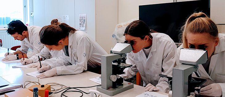 Medical Diagnostics Summer DIS Stockholm